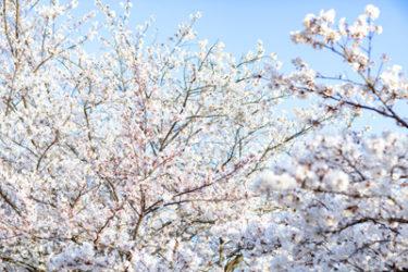 【2020年3月】札幌で節約一人暮らしの生活費と安給料を公開